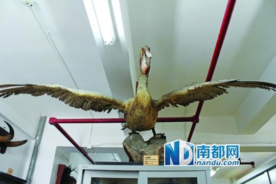 中山大学校园内的生物博物馆最近新增了一个展厅,以水生动物标本为主