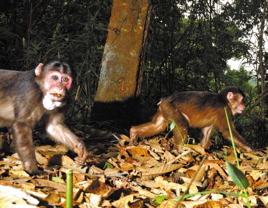 用陷阱相机追踪野生动物