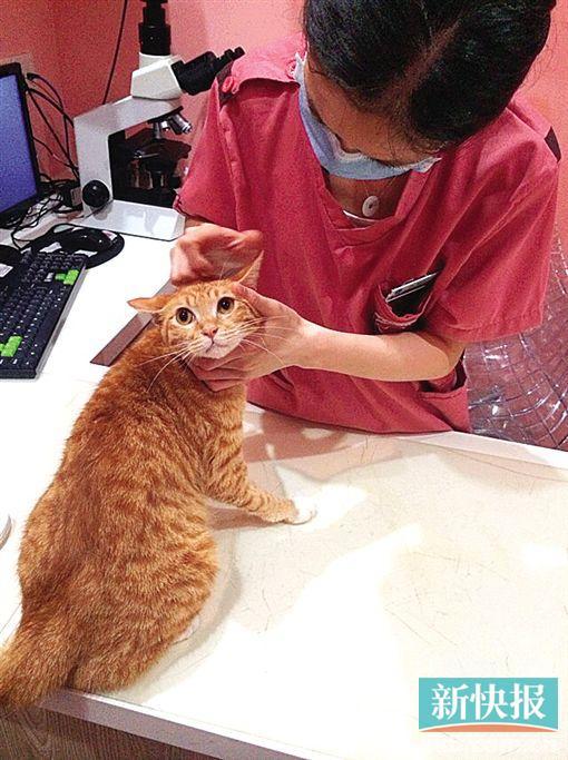 广州市动物诊疗行业协会