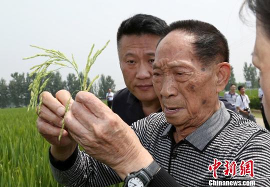 袁隆平认为,山东省南部的条件比较适合高产水稻种植。 李东升摄