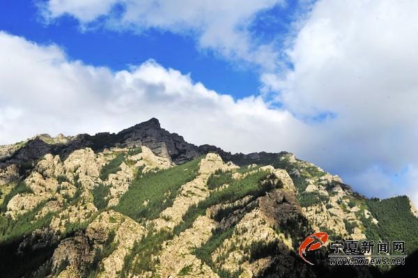 敖包疙瘩,海拔3556米,是贺兰山海拔最高的山峰,登临其上,周围美景尽收眼底,林海、云雾美不胜收。如果漫步林间,厚厚的青苔更如地毯一样柔软而美丽。 宁夏新闻网记者 祁瀛涛 摄