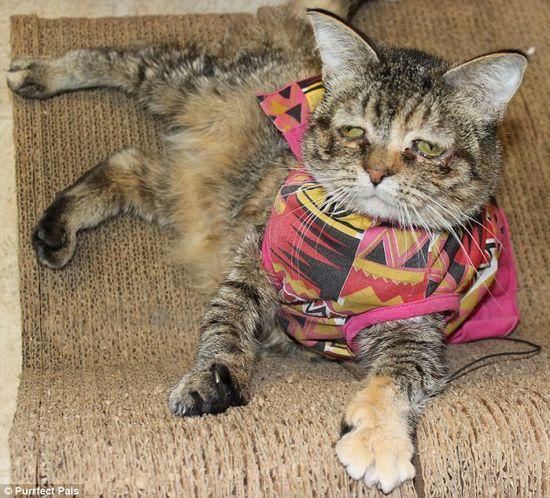"""华盛顿宠物领养中心的职员说图克""""非常可爱"""