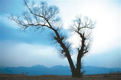 大树剪纸图解步骤