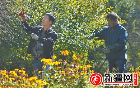 """乌鲁木齐市林业局园林工人技能""""大比武"""""""