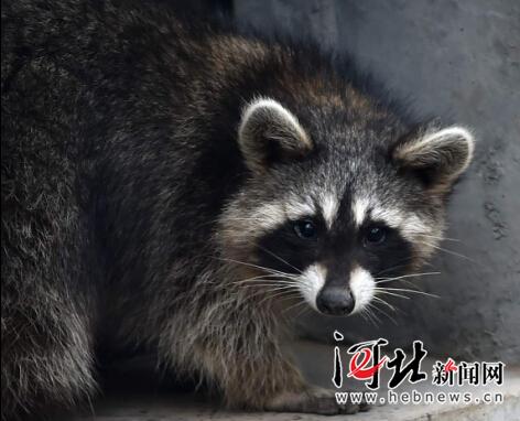 国庆前夕石家庄市动物园引进新动物