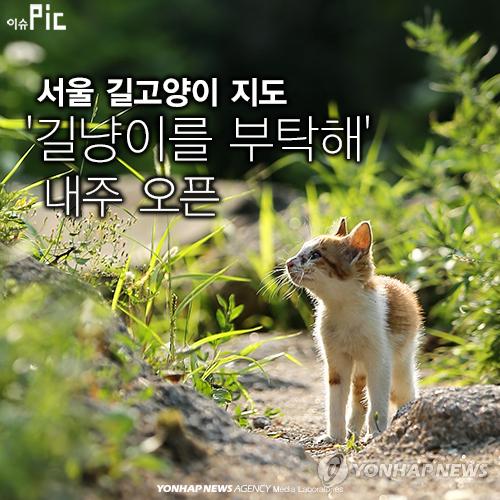 """动物保护管理系统""""网站公开,在网站上可以了解流浪猫的抓捕时间和地点"""