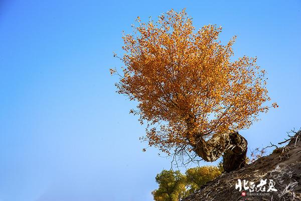 转载:新疆 · 沙漠里最后的罗布人 - 顺其自然 - 顺其自然的博客