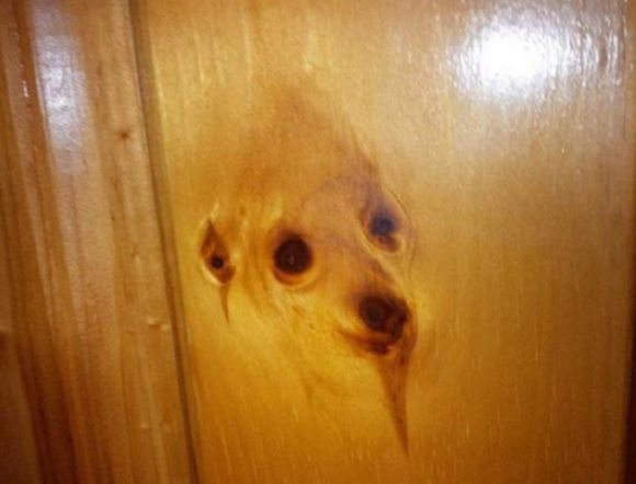 日本网友曝家中木板图案形似小狗引热议
