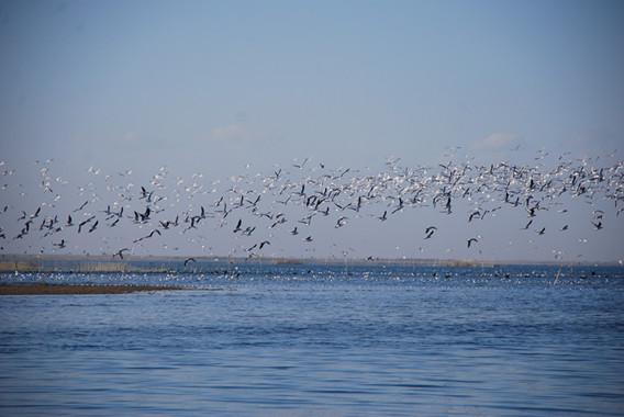 博斯腾湖畔的鸟儿