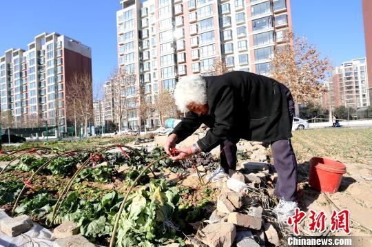 12月30日,郑州航空工业管理学院东校区,未开工建设的一处体育场被