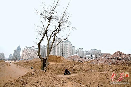 """""""王说,当时这株树上有政府挂的""""300年古树名木皂角树""""的牌子."""