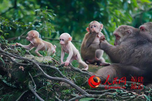 可爱漂亮绘画图群猴子