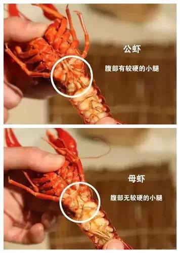 记者卧底揭秘郑州夜市小龙虾