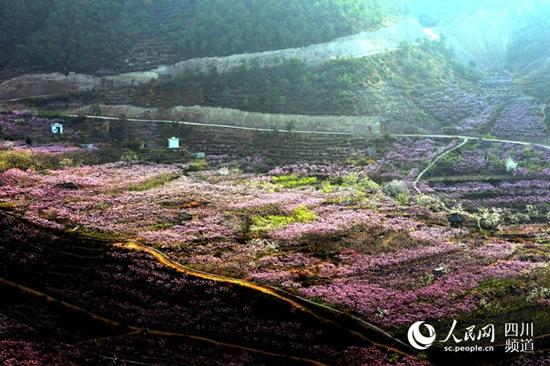 申沟村十里桃花园(姜锦摄)-汉源依托申沟村十里桃园 打造川西后世