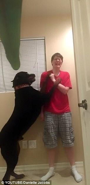丹妮尔·雅各布的狗狗萨姆森跳起来阻止她伤害自己。(图片来源:《每日邮报》)