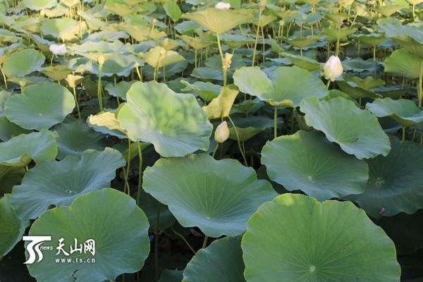 莎车县城南水系赛江南