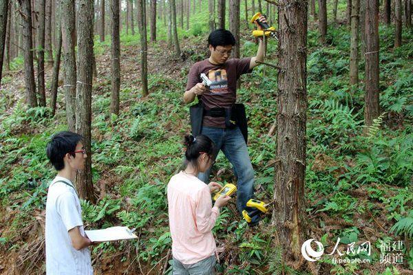 领学生开展杉木硬度指标