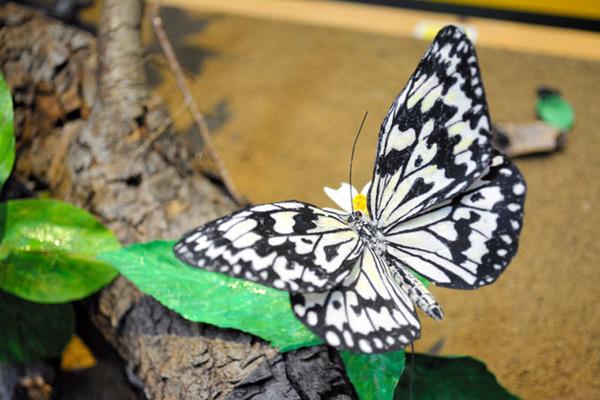 驹宫洋用纸巾做的蝴蝶(网页截图)