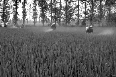 每年一号文件都将刺激农业股走强。