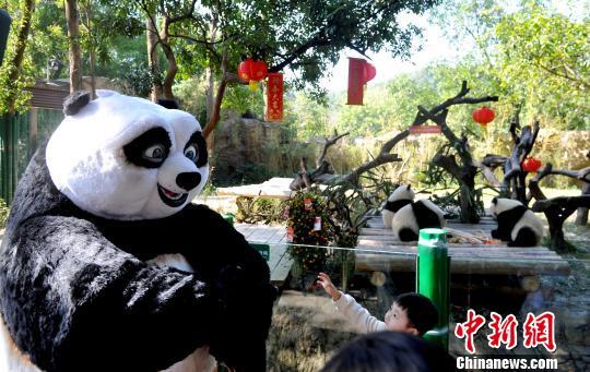 春节期间,正在热映的《功夫熊猫3》主角阿宝,来到广州长隆野生动物世界,与大熊猫三胞胎共贺猴年。 刘卫勇 摄 中新网广州2月9日电 (王华 咏仪)春节期间,正在热映的《功夫熊猫3》主角阿宝,来到广州长隆野生动物世界,与大熊猫三胞胎共贺猴年。 2月9日大年初二,天公作美,广州延续阳光明丽,广州长隆野生动物世界内人头攒动,很是热闹。一位特殊客人更为园区增添欢乐气氛。正在热映的好莱坞动画大片《功夫熊猫3》主角阿宝,现身现实版熊猫村长隆野生动物世界大熊猫中心,探访居住在这里的14位乡亲们,并与同在该