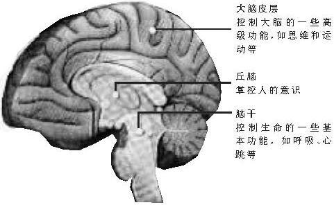 大脑皮层功能严重损害是植物人形成的主要原因