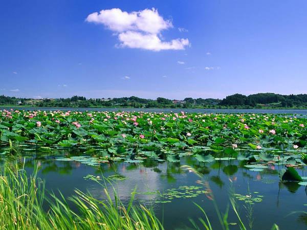 衡水湖。图片来源网络