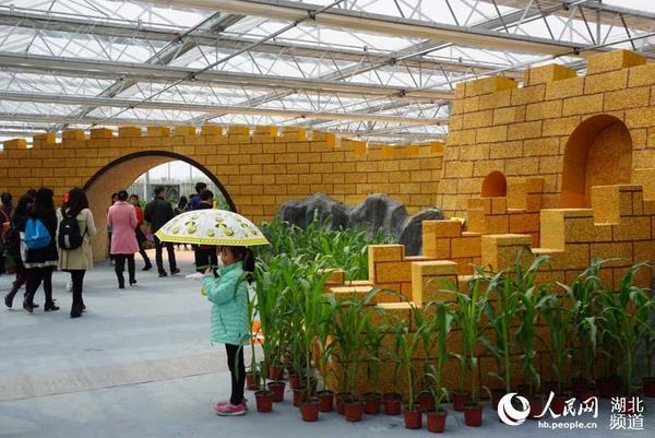玉米粒拼的长城