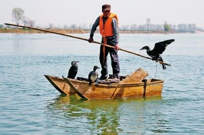捕鱼人驱赶鱼鹰捕鱼记者李晓波摄影
