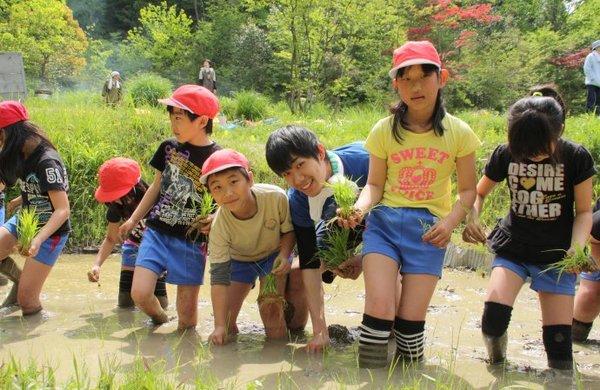 日本孩子为何没人想当老板? - 苇苇草 - 苇苇草
