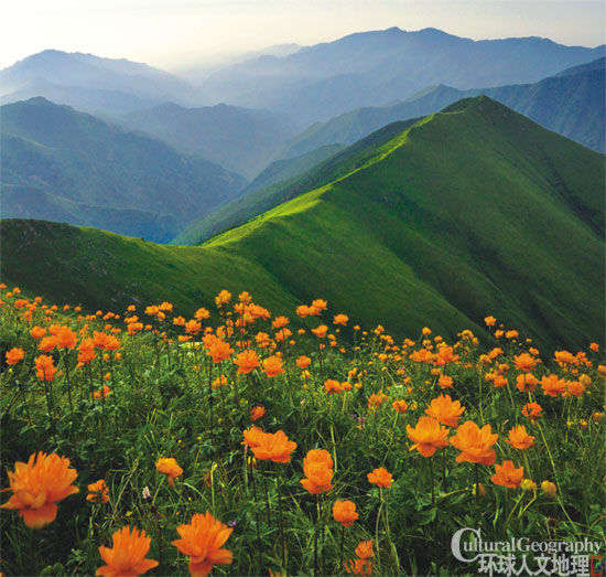 山坡上盛开的野花