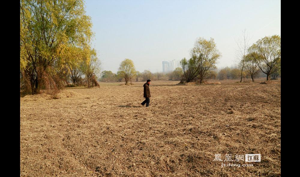 徐开林在岛上开辟出了200多亩的荒地种植小麦,这也成了老两口目前最主要的收入来源。两人年事已高,耕种收割主要依靠儿子帮忙。但由于岛上土壤半沙半土不够肥沃,夏天汛期江水常常淹没麦田,所以收成不是很好。12月13日,徐开林巡视麦田。(王剑/摄)