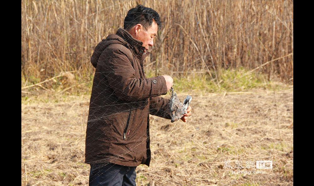 潜州岛尚未开发的原始生态成为众多鸟兽的天堂,这也吸引了一些不法份子上岛张网捕鸟。12月13日,徐开林在麦地边发现一张网,上面困了3只野鸟,性格温和的徐开林忍不住骂了一句脏话。老徐将野鸟从网上解下后放飞。(王剑/摄)