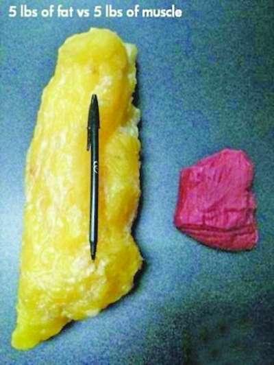 肌肉 脂肪/同等重量的脂肪和肌肉,脂肪的体积要远远比肌肉大得多。