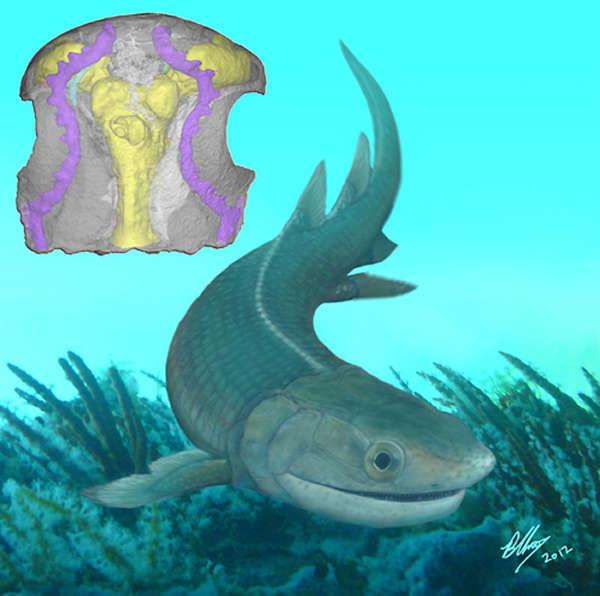 09亿年的基干四足动物化石