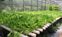 生态沂蒙山 优质农产品