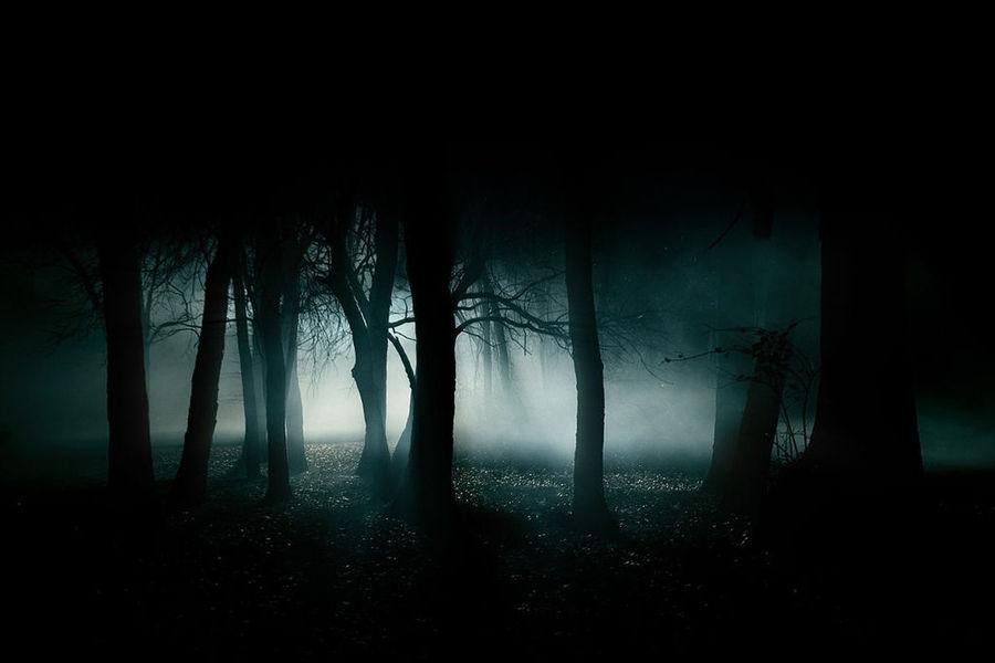 宇宙就是一座黑暗森林,每个文明都是带枪的猎人,像幽灵般潜行于林间,轻轻拨开挡路的树枝,竭力不让脚步发出一点儿声音,连呼吸都必须小心翼翼:他必须小心,因为林中到处都有与他一样潜行的猎人,如果他发现了别的生命,能做的只有一件事:开枪消灭之。