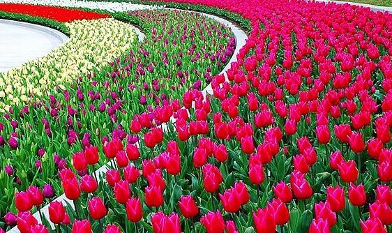 昌吉国家农业科技园区:产业化联合体引领现代农业