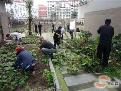 种菜松土步骤图片
