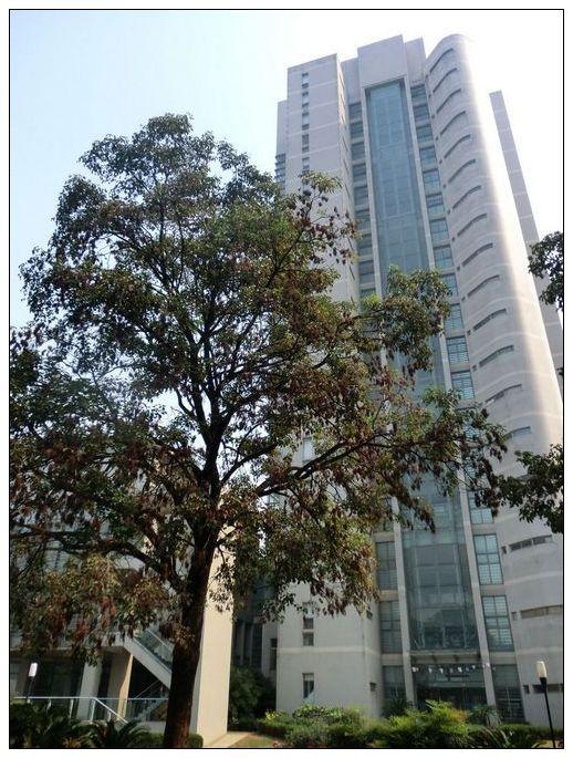 理化大楼前的大树上果实累累-第九届亚澳火灾科学技术大会在合肥举办