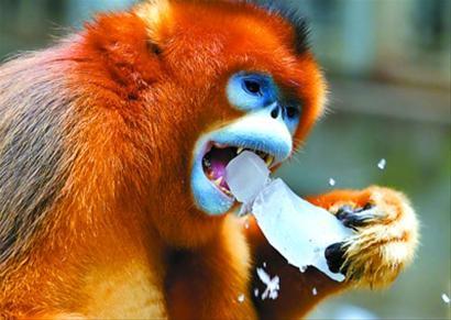 """上海野生动物园里,动物们诙谐的避暑""""智慧""""(图)"""