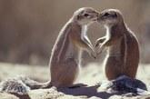 吻不够的南非地松鼠。