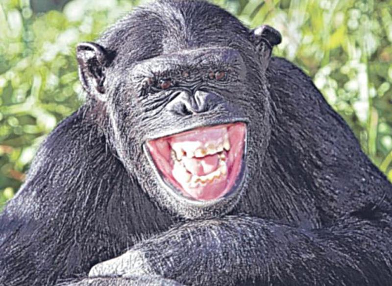 不同动物的大笑瞬间[高清大图]