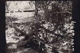 巴莫,缅甸北部。中国卫兵在散兵坑中监视战地边界。这个战士要确保敌人无法渗透防线,而日军只有一百码远。