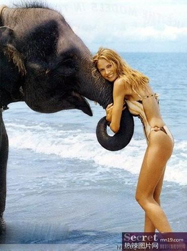 搞笑大象趣闻:调戏美女组图
