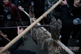 山东百余警力 围捕咬死村妇的一灰狼 被击毙(1/8) - 高山松 - gaoshansong.good 的博客