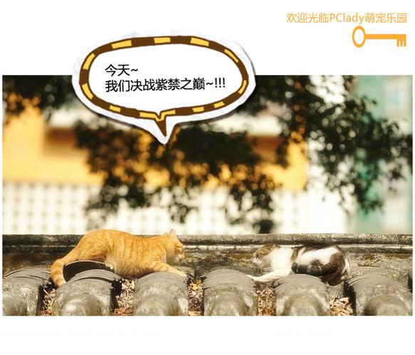 修炼成仙的狸猫PK倒挂金钩的米奇 霸气外露