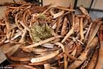 探惨绝人寰的非洲野象葬身之所