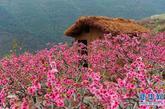 这是4月9日,在汉源县双溪乡申沟村拍摄的万亩桃园一角。新华社记者 江宏景 摄