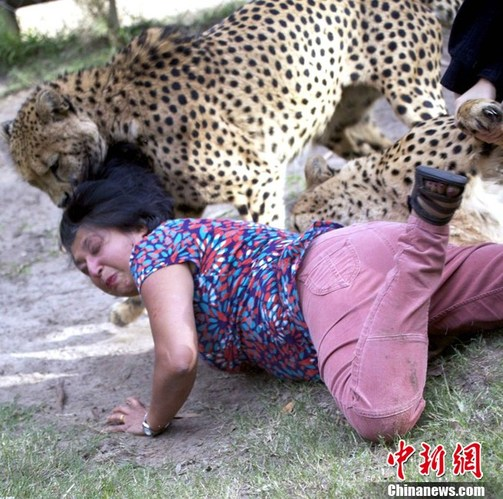 实拍猎豹咬人恐怖瞬间