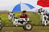 4岁的Leo Huynh乘坐木鞋郁金香农场的奶牛小火车。